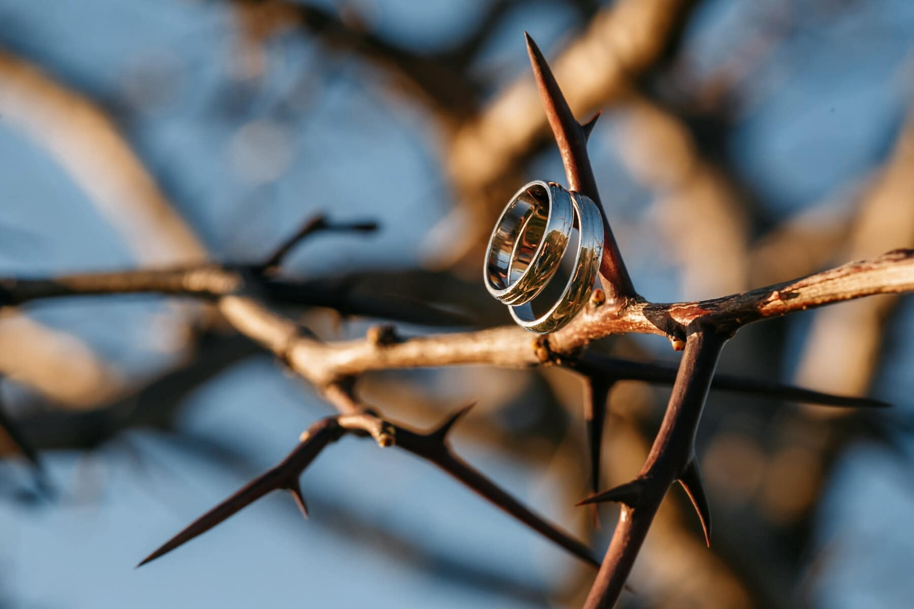 sharp, thorn, branchlet, wedding ring, gold, golden glow, rings, blur, outdoors, wood