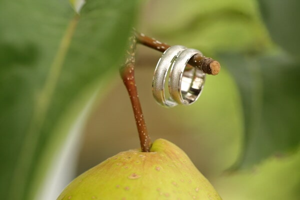 pear, jewelry, fruit tree, rings, branchlet, close-up, leaf, nature, fruit, blur
