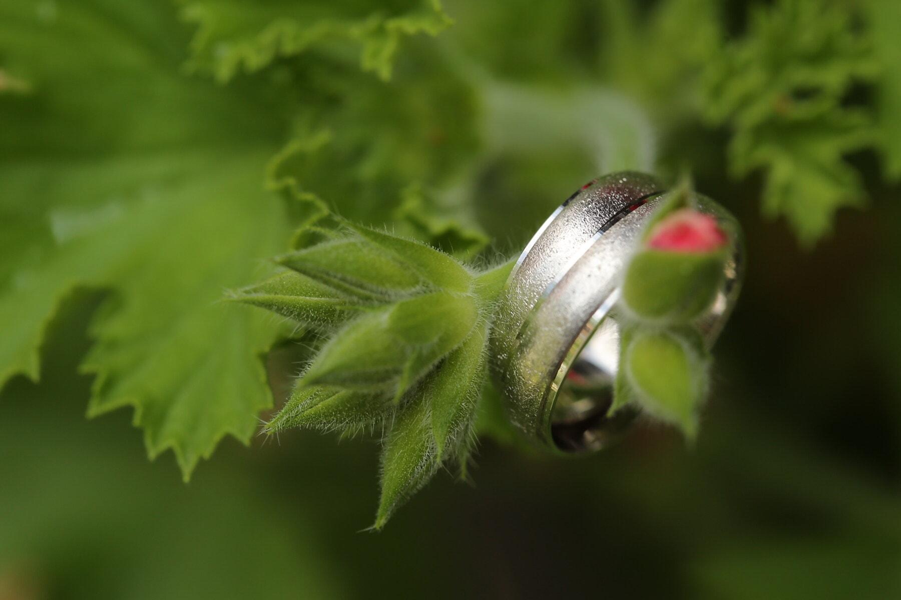 blomst knopp, sølv, ringer, detaljer, nært hold, grønne blader, makro, blad, flora, busk