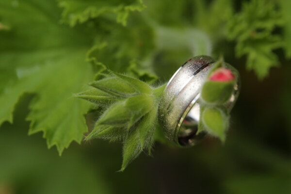 flower bud, silver, rings, detail, close-up, green leaves, macro, leaf, flora, shrub