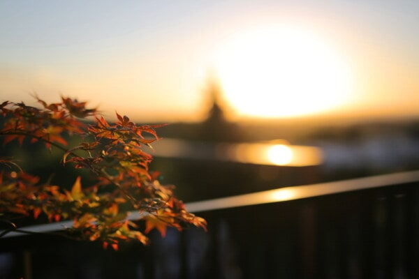 balcony, sunset, branches, sun, dawn, light, blur, color, landscape, leaf
