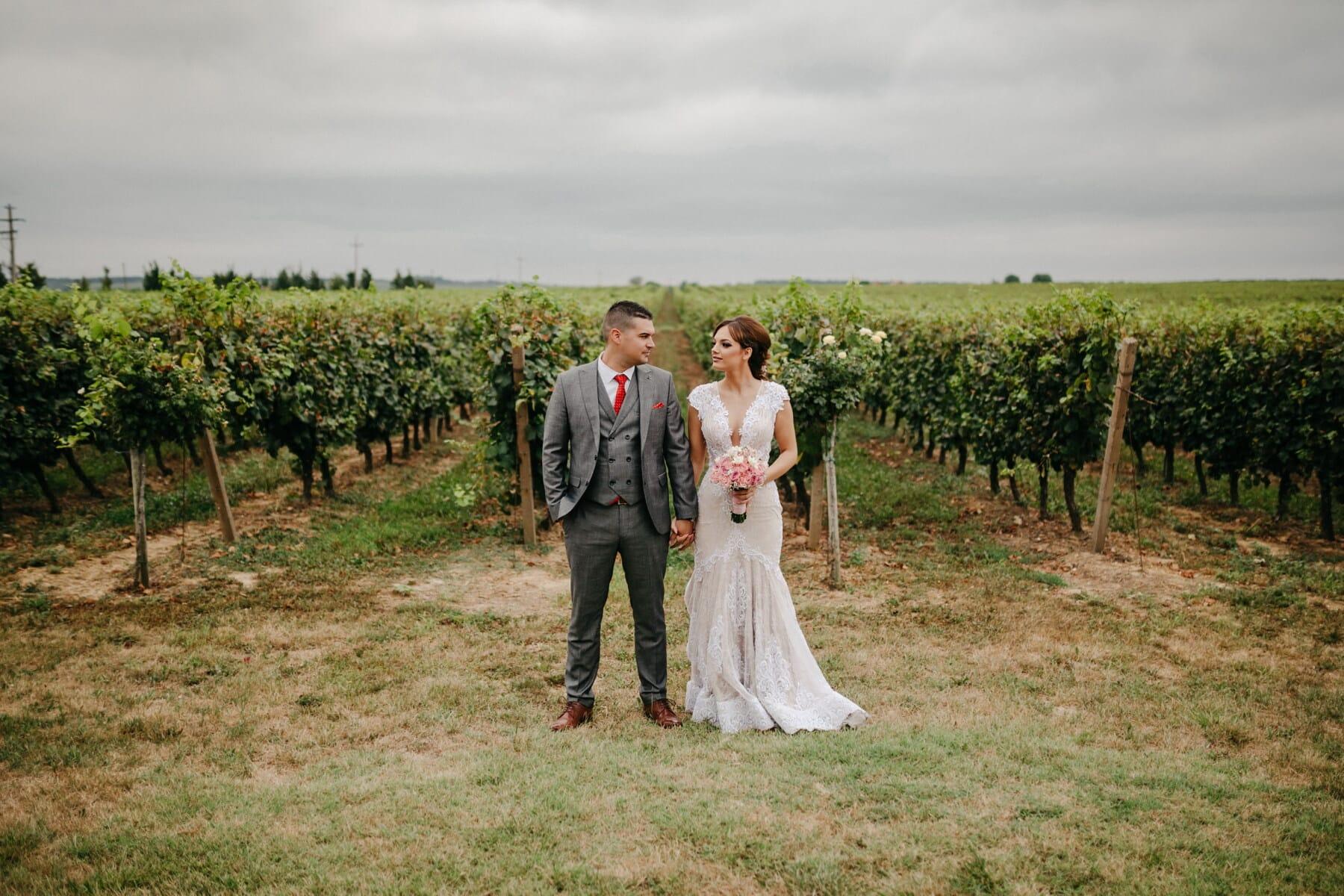 frisch verheiratet, Weinberg, Bräutigam, Hochzeit, Menschen, Braut, Landschaft, paar, Mädchen, Frau