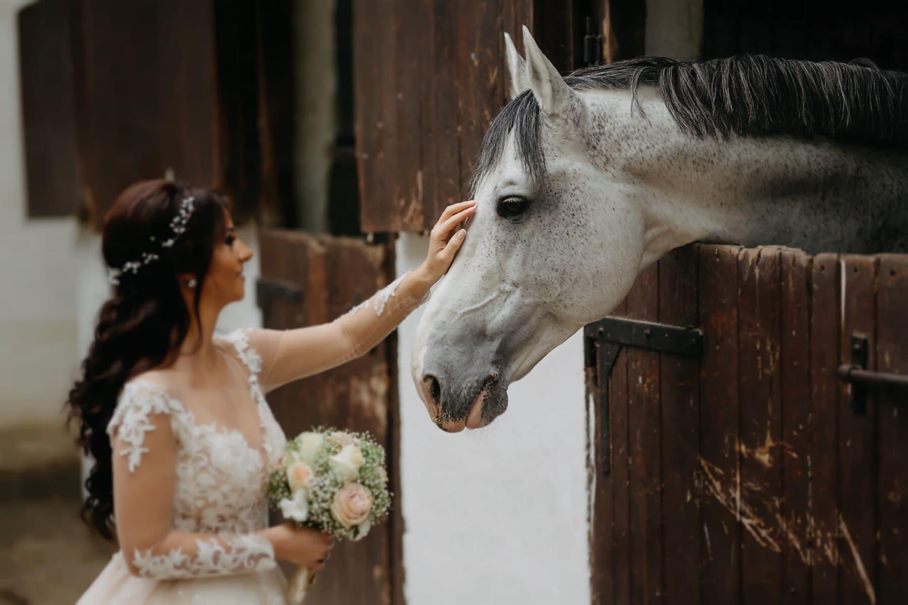 mén, tanya, ló, pajta, menyasszony, nő, farm, állat, esküvő, portré
