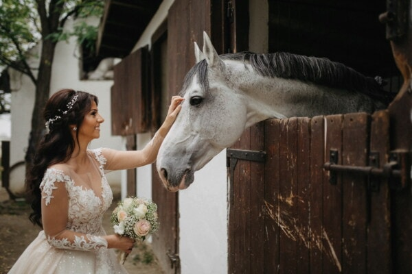 pet, bride, horse, friendship, farmer, farmland, barn, ranch, countryside, farm
