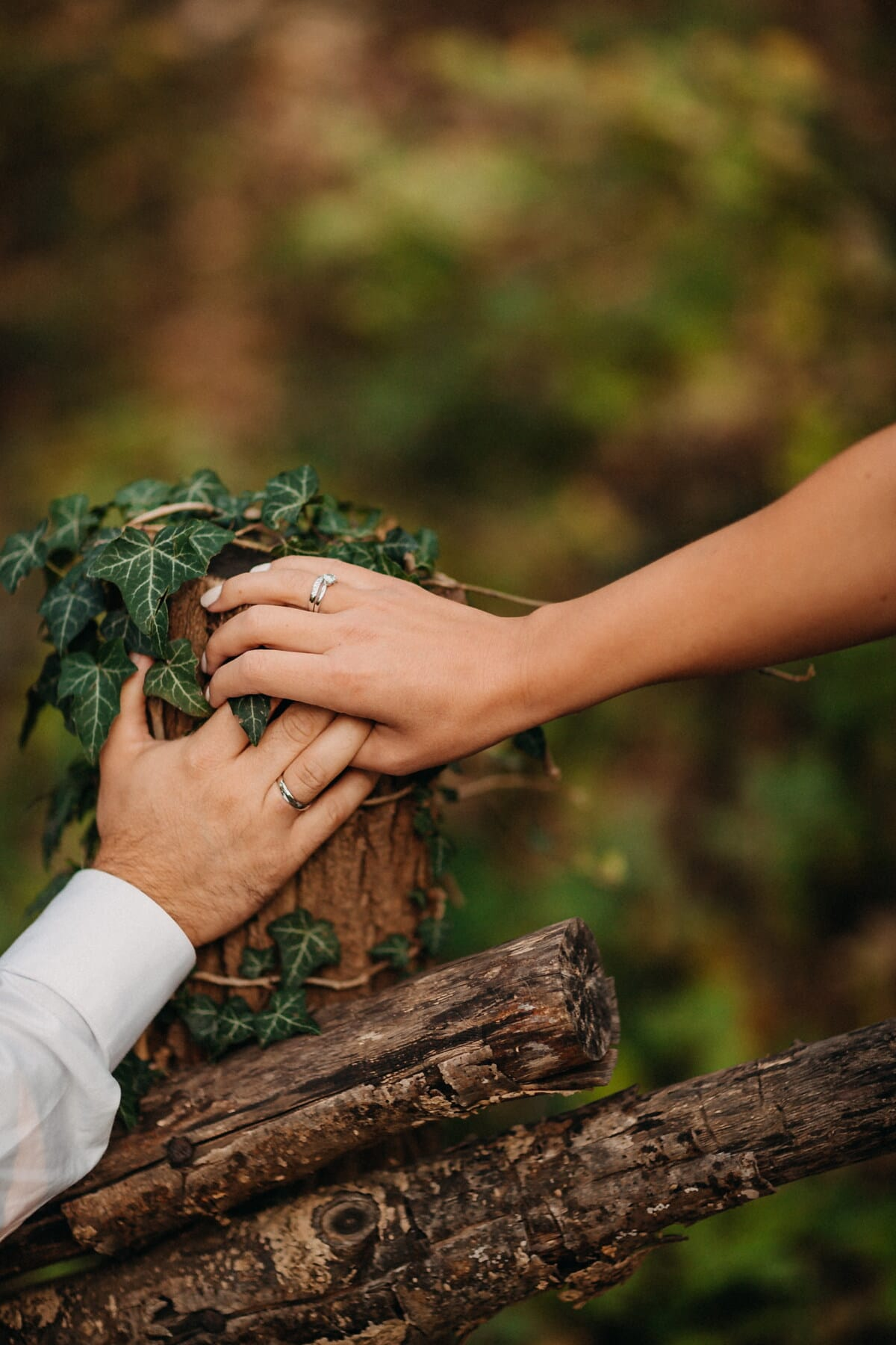 togetherness, wedding ring, holding hands, jewelry, hands, picket fence, ivy, people, nature, wood