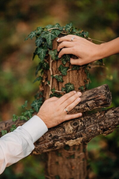 hands, picket fence, rings, wooden, ivy, nature, wood, people, leaf, outdoors