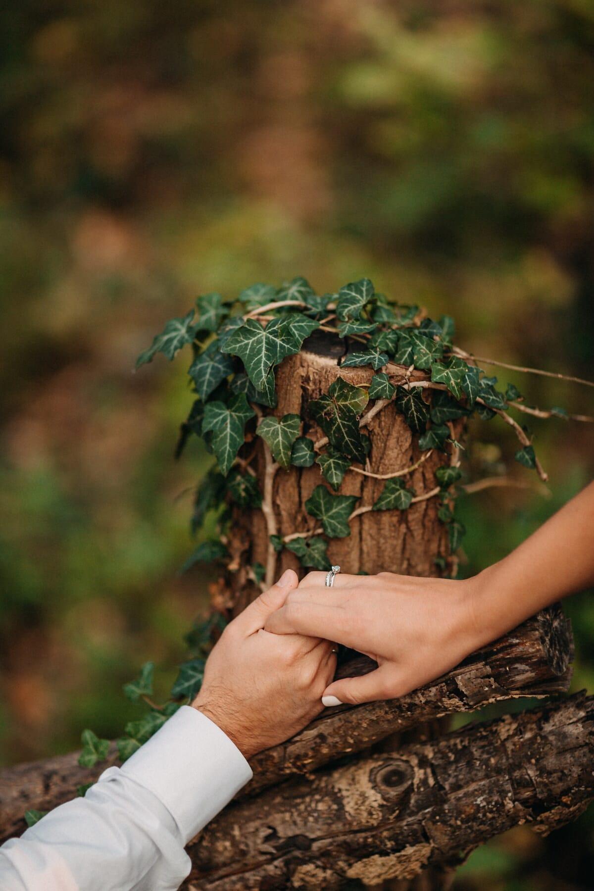 drželi se za ruce, plot, břečťan, příroda, kořeny, zelené listy, lidé, strom, list, žena