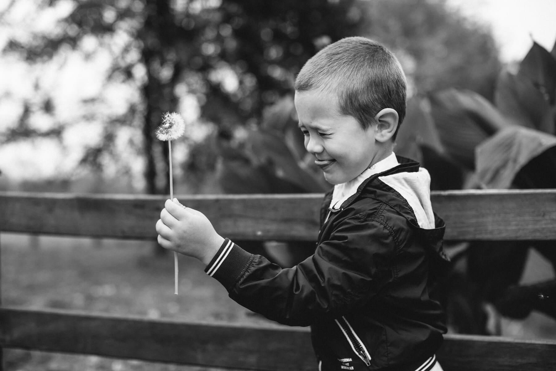 chlapec, pampeliška, foukání, černá a bílá, dítě, černobílý tisk, portrét, venku, rekreace, koncentrace