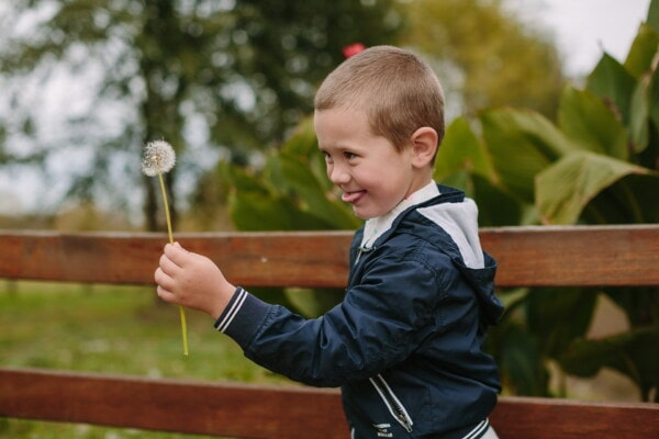 school child, boy, young, blowing, dandelion, enjoyment, fun, child, outdoors, nature