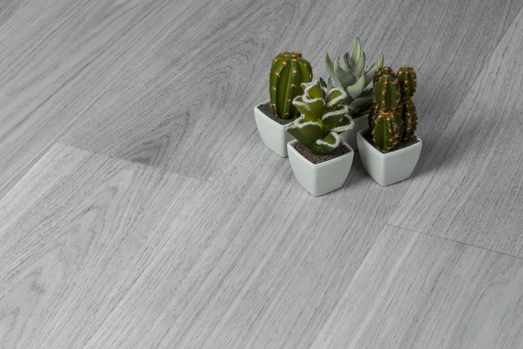 minimalisme, kaktus, miniatyr, blomster, blomsterpotte, flora, natur, tre, blad, saftige