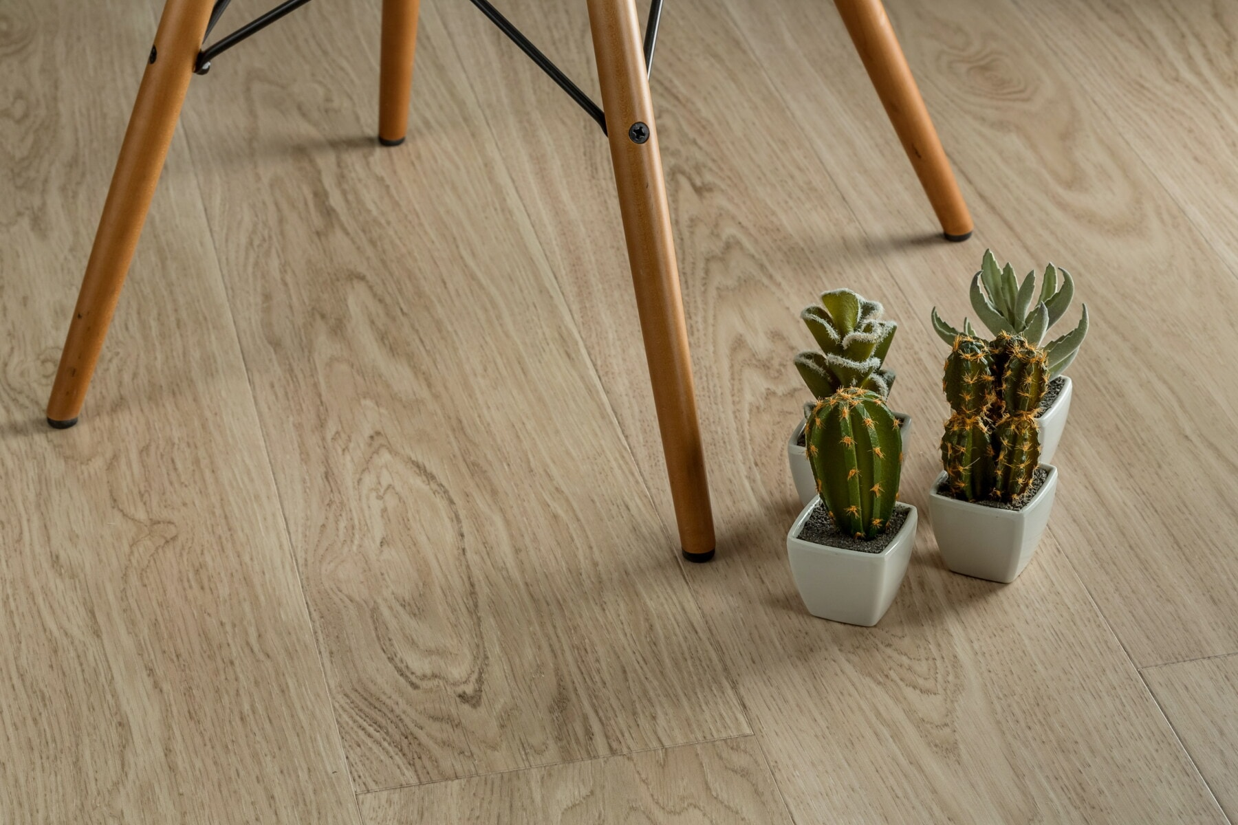 miniatyr, kaktus, blomsterpotte, minimalisme, stol, etasje, stil, parkett, tre, tre