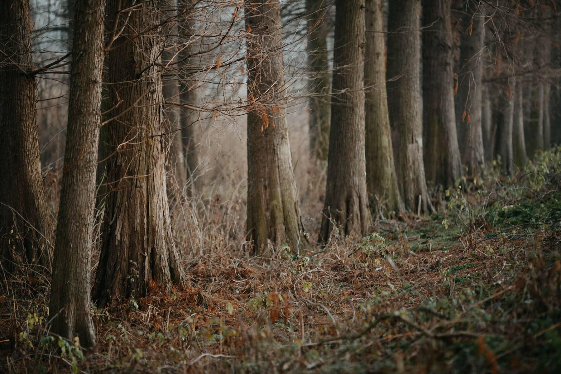 fák, reggel, erdő, köd, őszi szezon, hideg, fa, táj, fa, természet