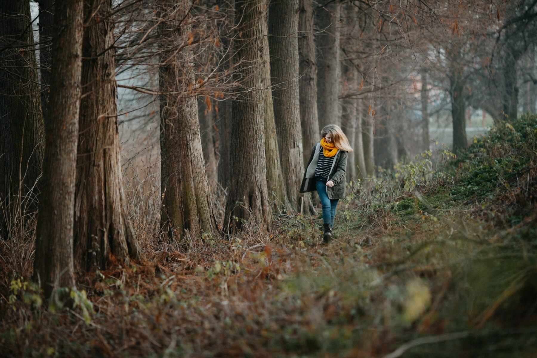 ung kvinde, vinter, skovstien, alene, gå, tåge, mäenrinne, træ, pige, træ