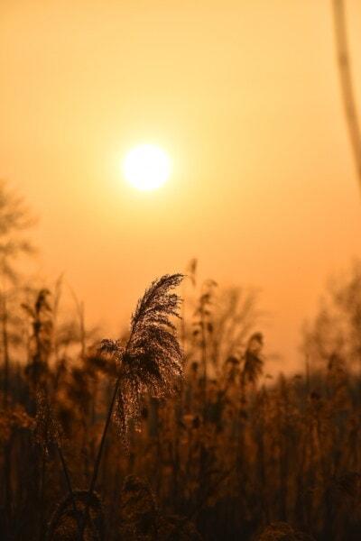 silueta, sol, distancia, sombra, puesta de sol, hierba, resplandor de cielo, césped, amanecer, trigo