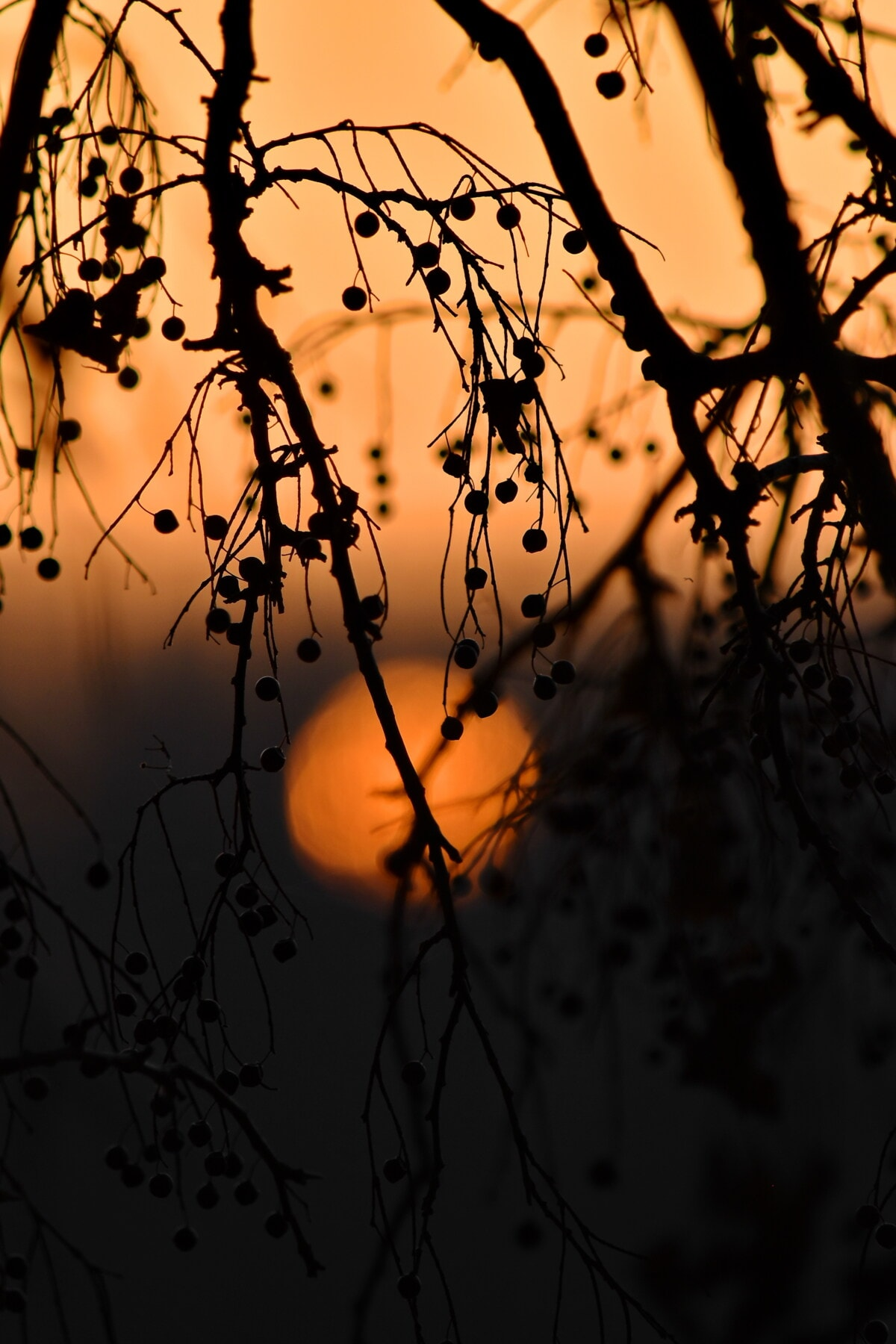 sunrise, trees, sun, branches, majestic, sunlight, orange yellow, yellowish brown, silhouette, nature