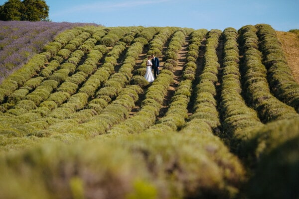 groom, just married, bride, hills, romantic, lavender, agriculture, field, rural, landscape