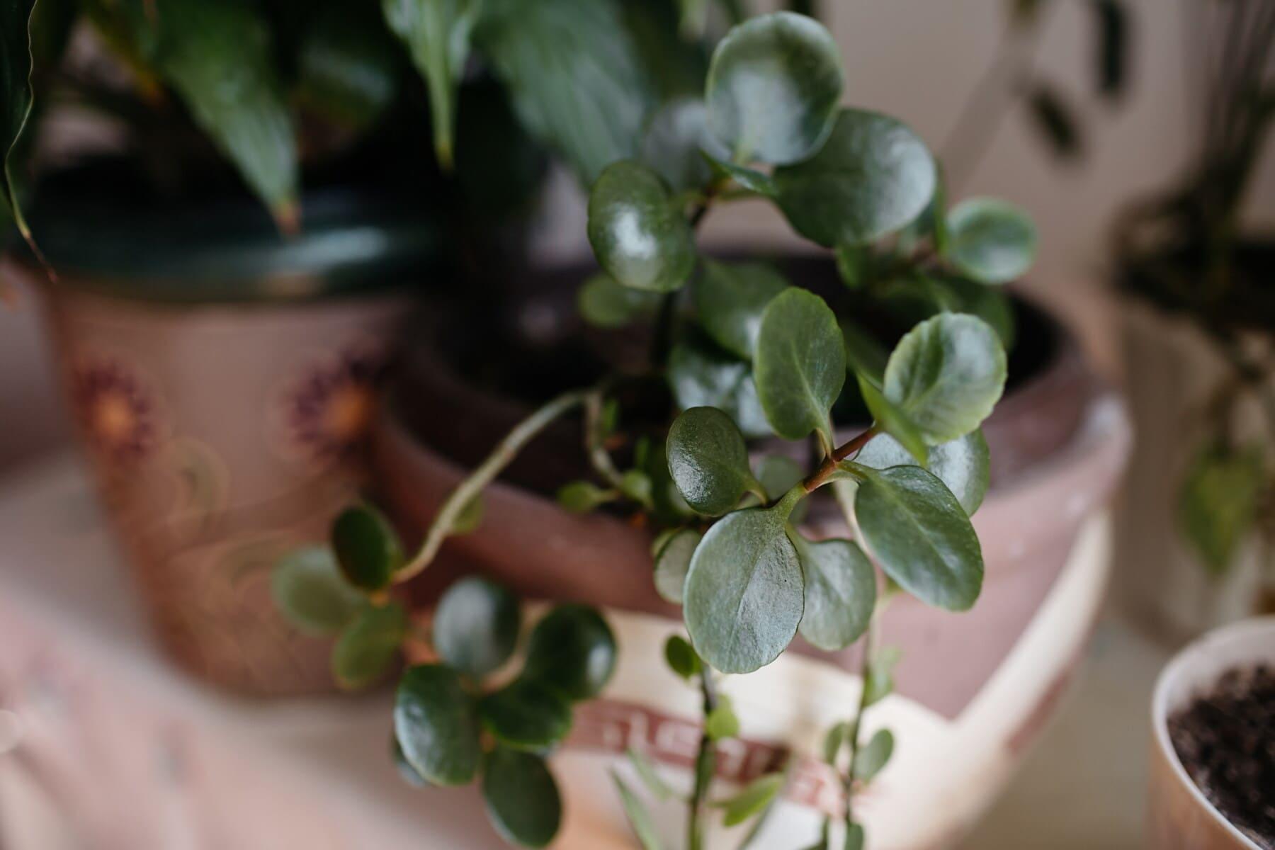 녹색 잎, 잎, 화분, 꽃, 가 까이 서, 포커스, 플로 라, 허브, 공장, 꽃
