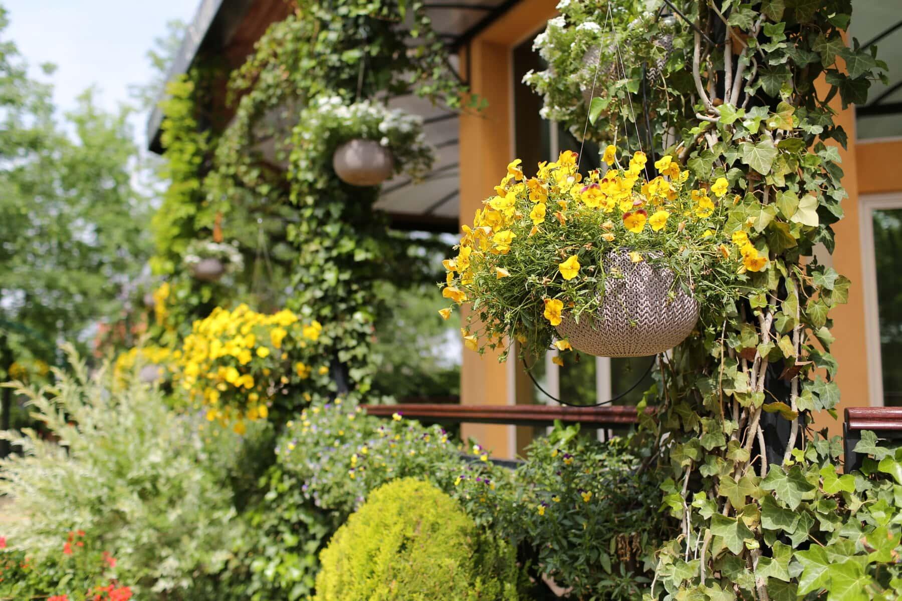 flower garden, terrace, front porch, ivy, flowerpot, flower, tree, garden, plant, leaf