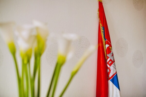 democratic republic, Serbia, flag, republic, white, eagle, democracy, wall, stick, tricolor