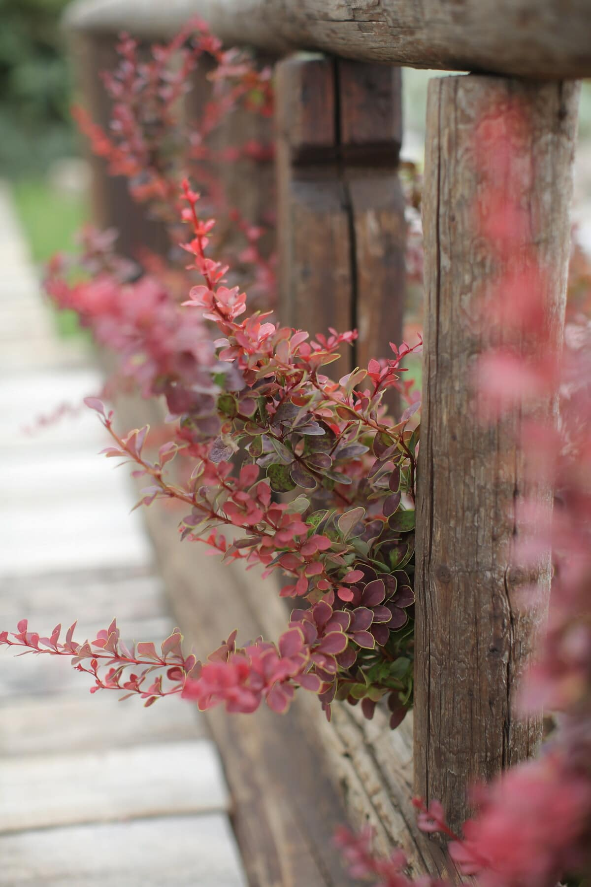 flower garden, branch, fence, nature, plant, tree, leaf, shrub, flower, flora