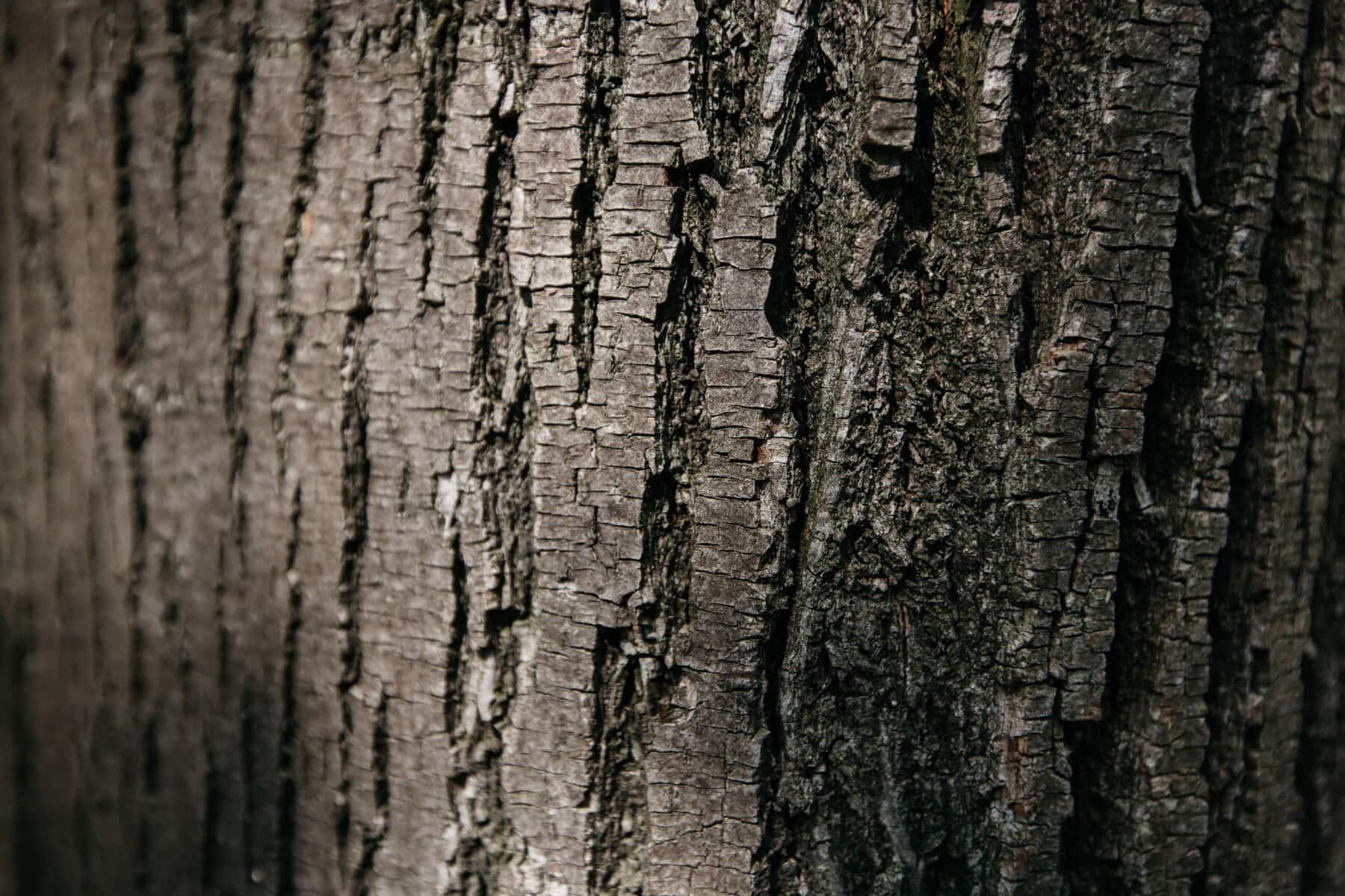 Holz, Struktur, Kortex, Borke, Schwarz, aus nächster Nähe, Textur, Holz, Stamm, rau