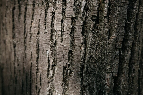 timber, tree, cortex, bark, black, close-up, texture, wood, trunk, rough