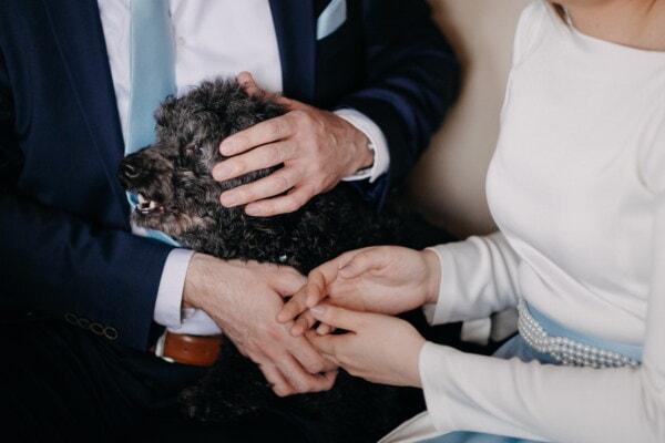 dog, hairy, curl, man, woman, holding hands, love, togetherness, affection, people