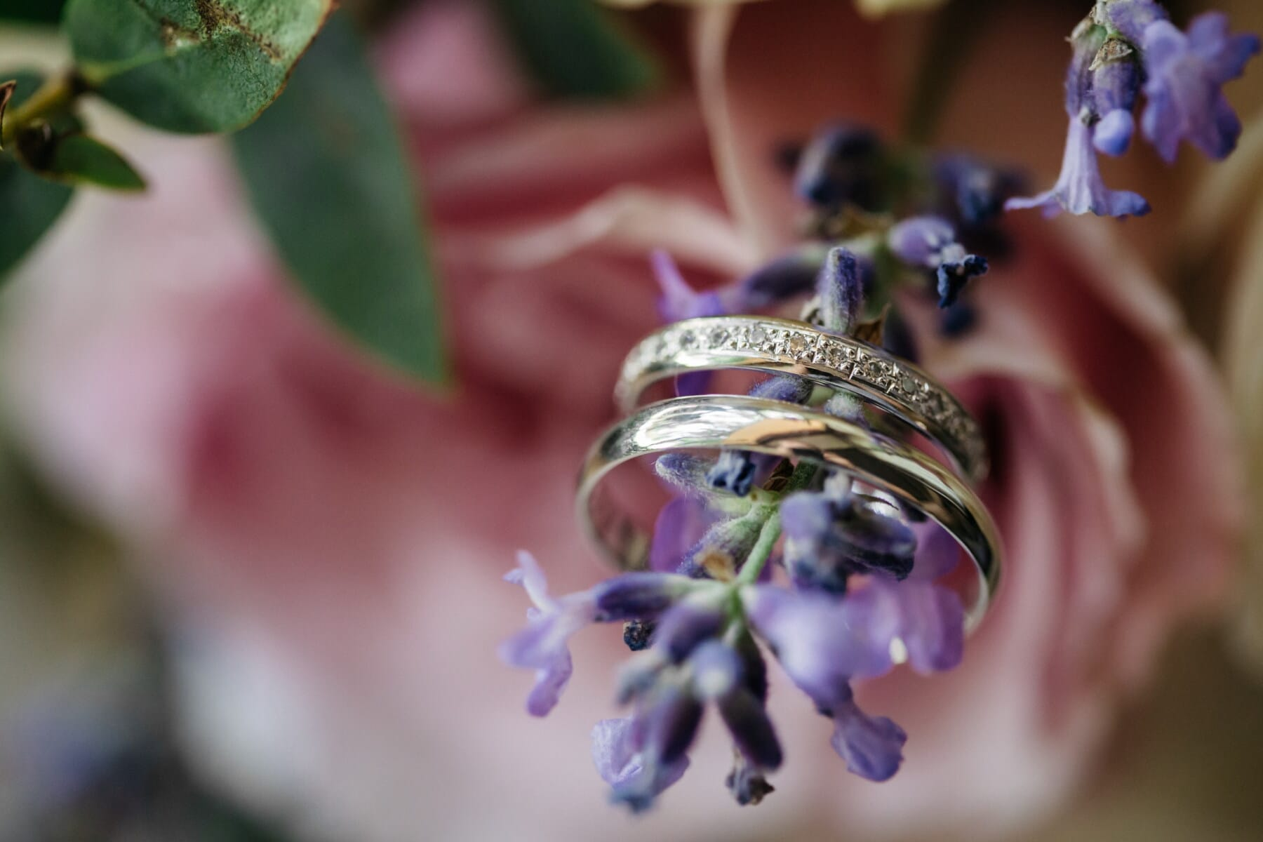 golden shine, wedding ring, gold, close-up, flower, lavender, jewelry, rings, herb, color