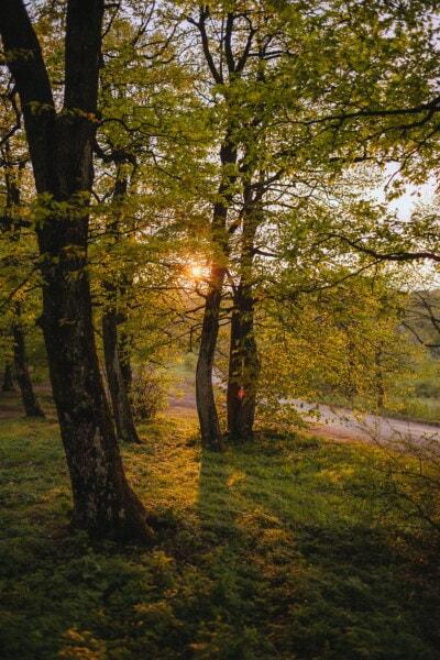 秋, フォレスト, 葉, ツリー, 木, 木材, 公園, ランドス ケープ, 夜明け, 公正な天気