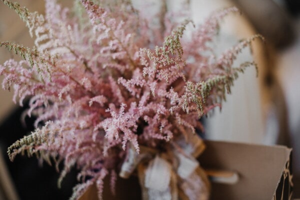 pinkish, bouquet, branchlet, gift, box, carton, flower, leaf, color, decoration