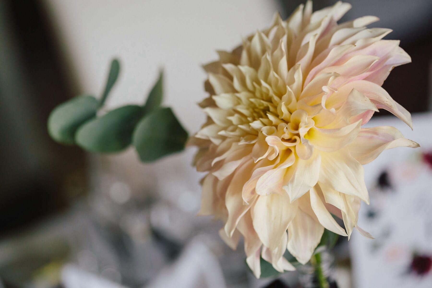 Dahlie, Blume, gelblich, Vase, Blatt, Sommer, im freien, Farbe, schöne, elegant