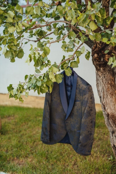 jacket, silk, hanging, trees, leaf, nature, tree, outdoors, wood, flora