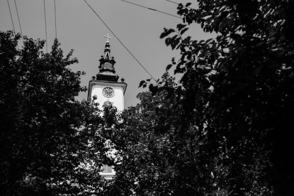 church tower, trees, branches, architecture, religion, tower, church, building, monochrome, silhouette