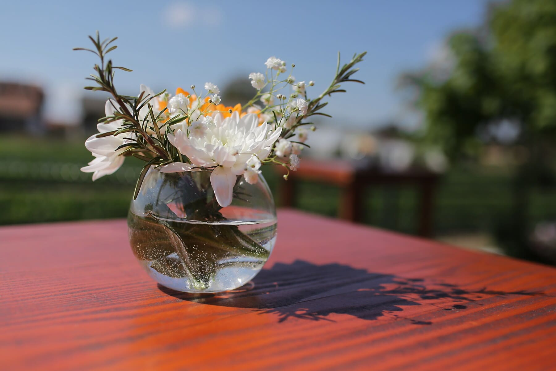 bowl, round, crystal, vase, rosemary, water, flowers, nature, flower, still life