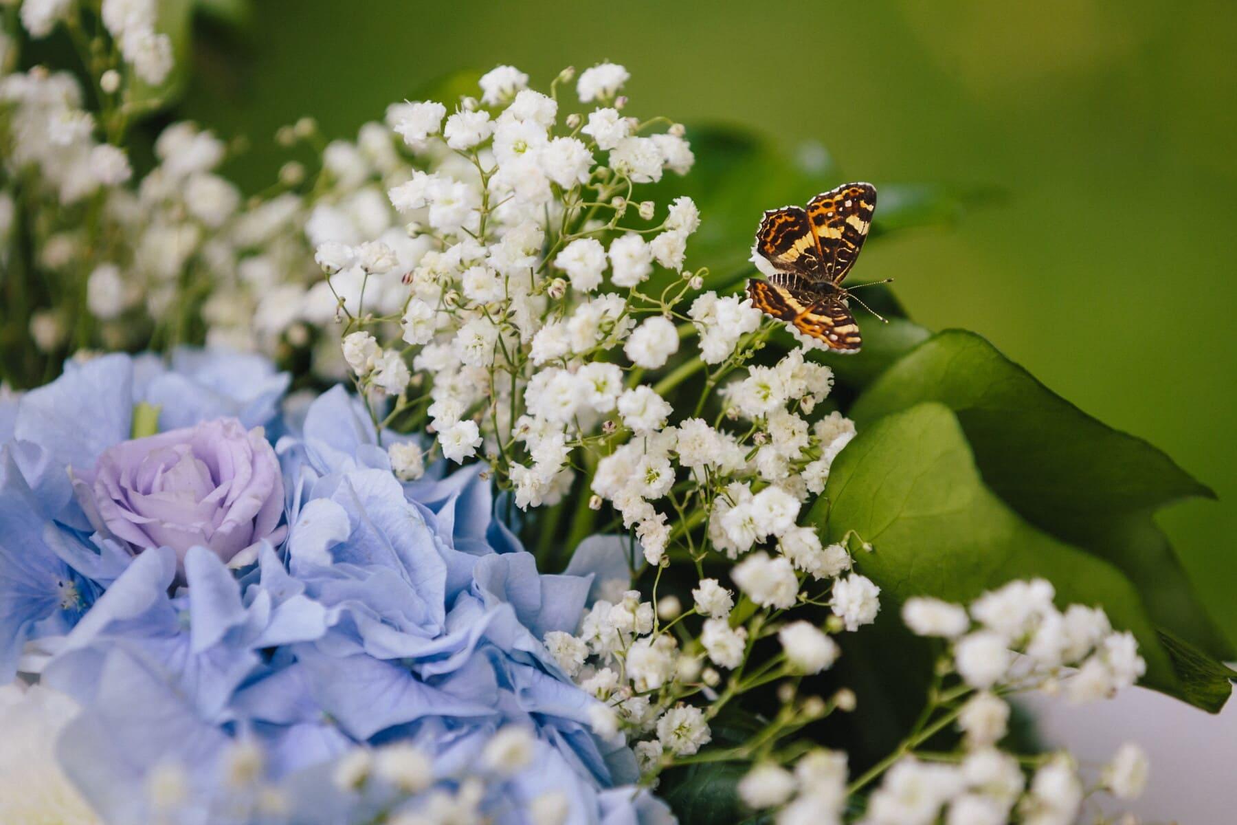 fjäril, pollinerande, fjäril blomma, lila, rosor, blomma, Anläggningen, blomma, ört, blommor