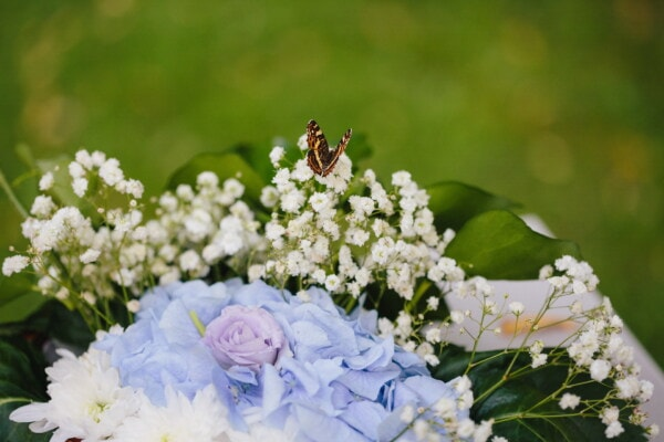 brown, butterfly, flowers, hydrangea, roses, bouquet, summer, leaf, plant, nature