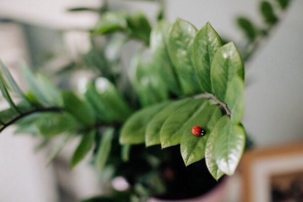 plastic, ladybug, miniature, green leaves, detail, decoration, branch, flowerpot, leaf, nature