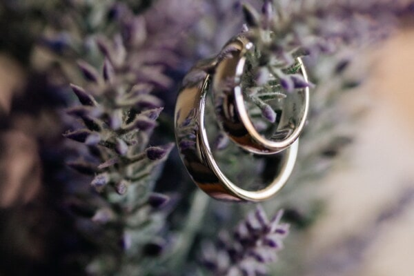 rings, gold, focus, shining, reflection, branchlet, close-up, lavender, flower, blur