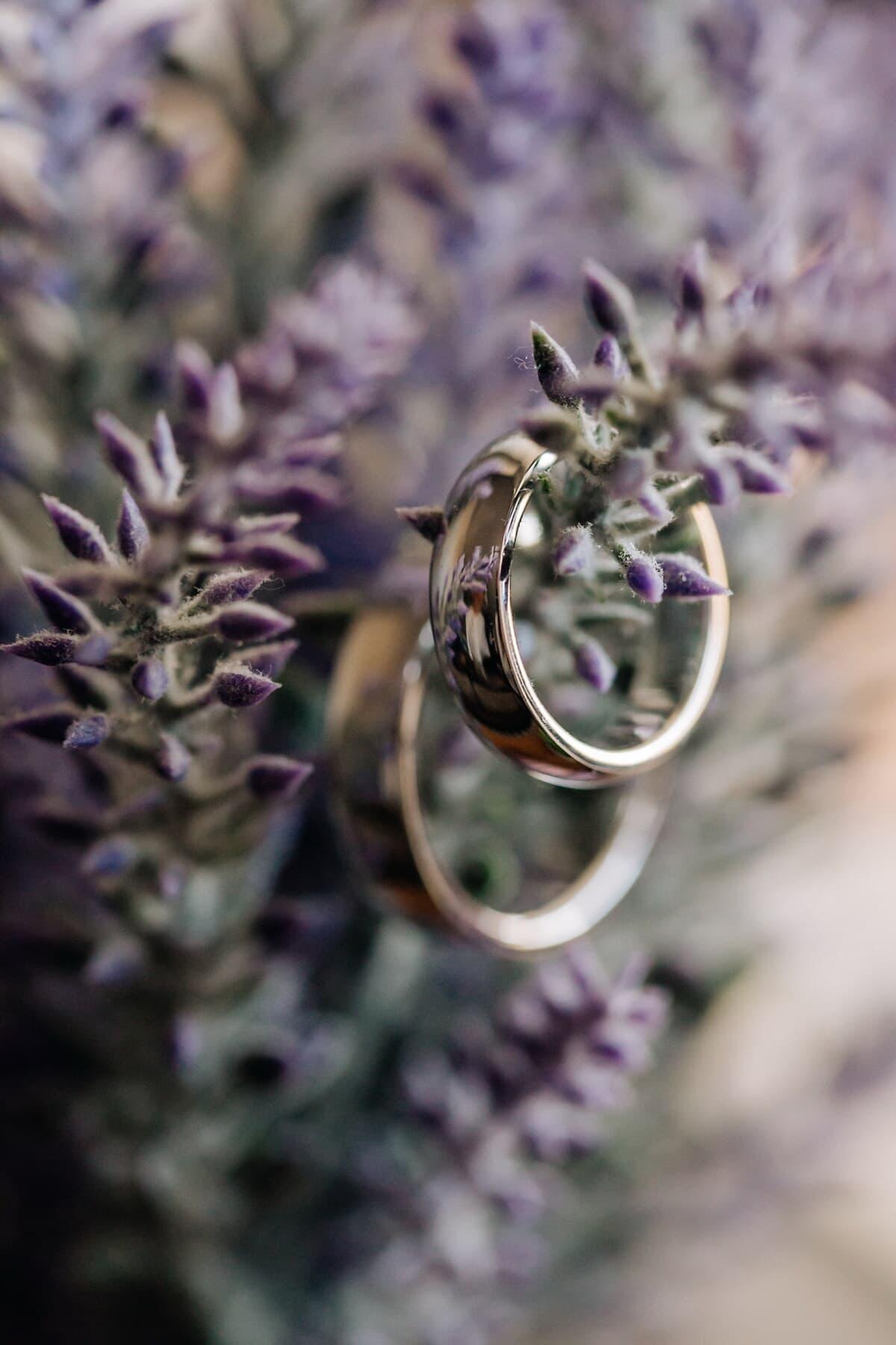 prstenje, makro, izbliza, sija, zlatni sjaj, fokus, zlato, cvjetni pupoljak, lavanda, biljka
