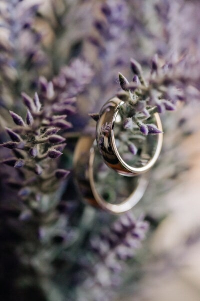 rings, macro, close-up, shining, golden shine, focus, gold, flower bud, lavender, herb