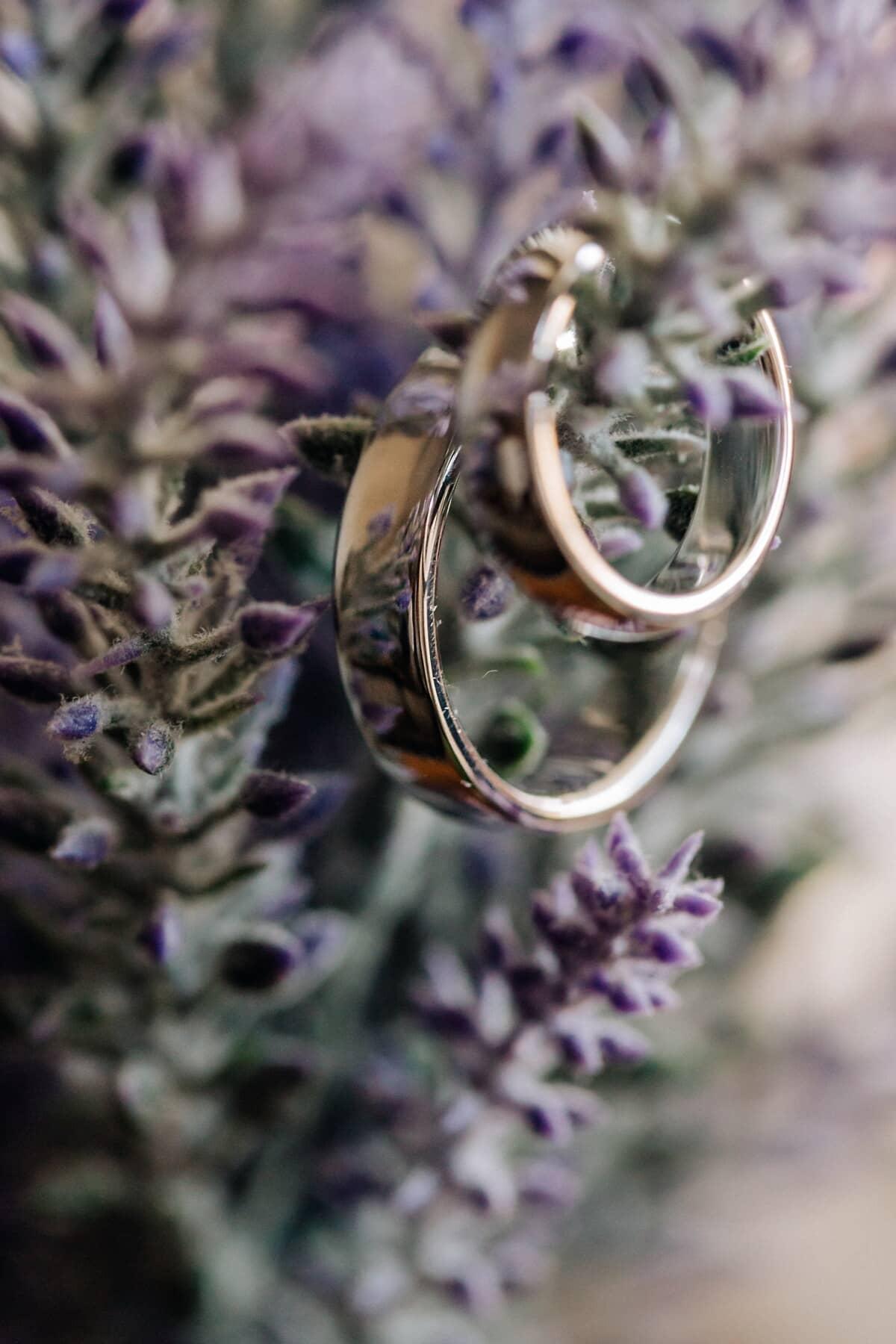 Ringe, goldener Glanz, Gold, glänzend, aus nächster Nähe, Fokus, Blumentopf, Lavendel, Blume, Kraut