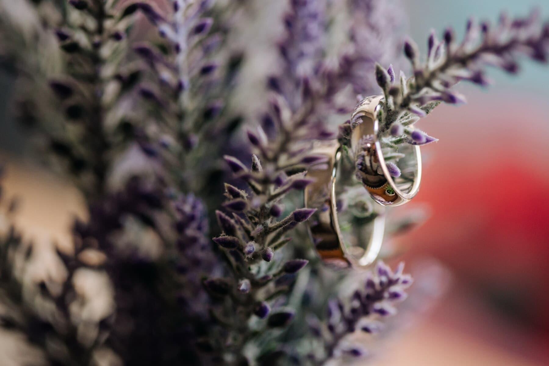 Lavendel, Blumentopf, Ringe, Schmuck, Gold, Fokus, Reflexion, Detail, Kraut, Blume