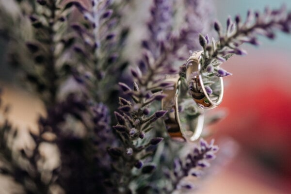 lavender, flowerpot, rings, jewelry, gold, focus, reflection, detail, herb, flower
