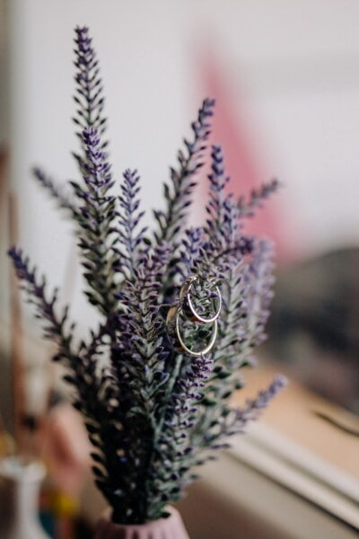 rings, wedding ring, metal, shining, gold, flowerpot, decoration, plant, flower, blur
