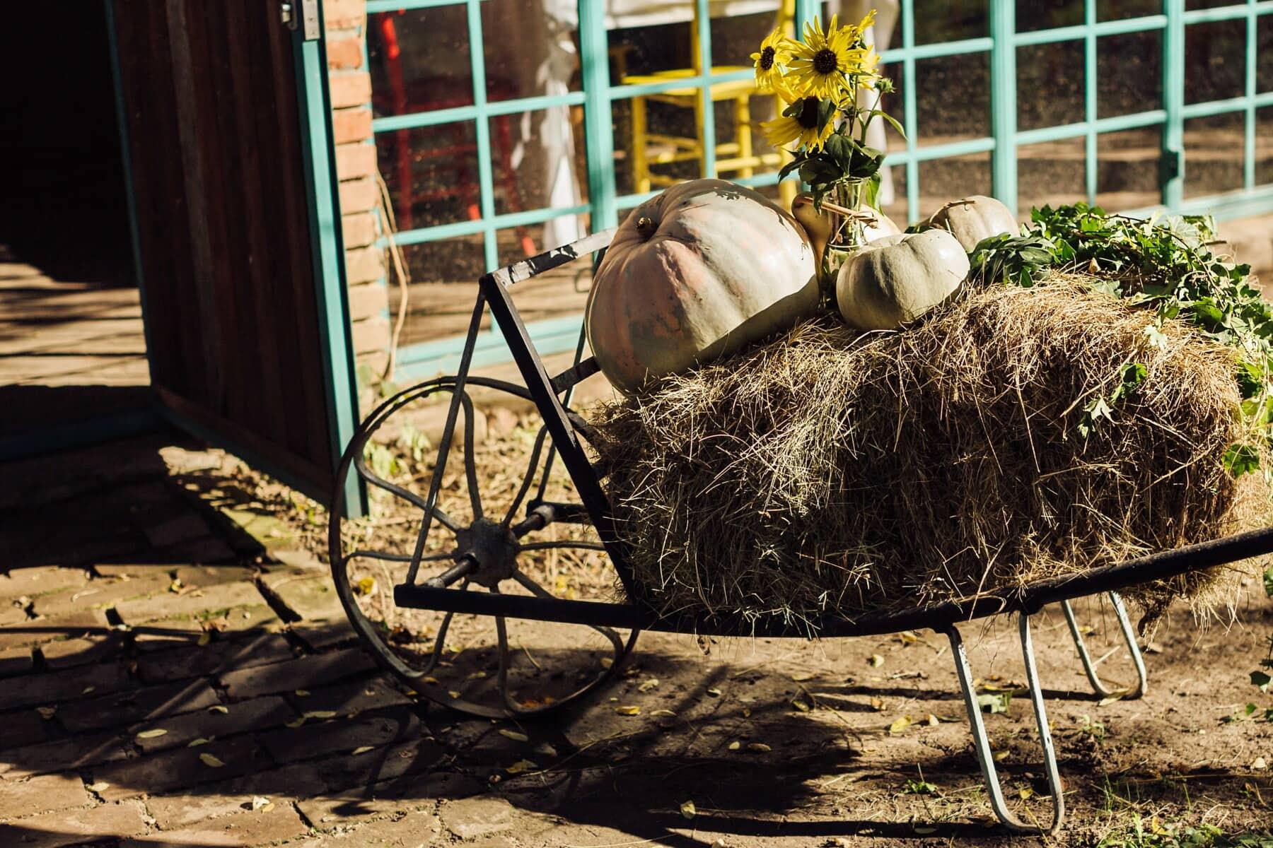 saison de l'automne, citrouille, chariot porte-sac, botte de foin, nature morte, tournesol, vintage, village, Hay, ferme