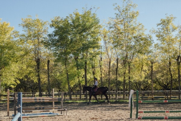 horse, rider, riding, training, training program, sport, forest, tree, nature, rural
