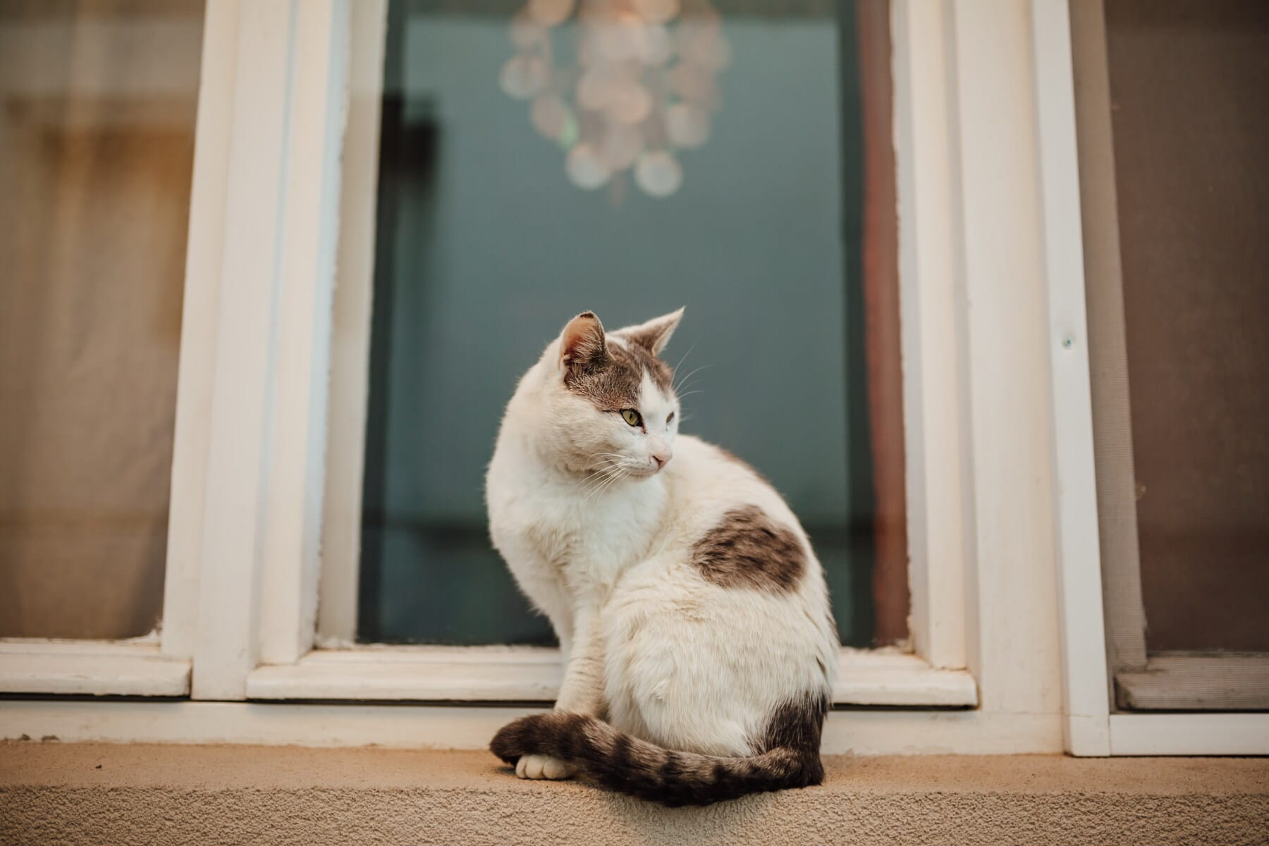 side view, kitty, domestic cat, sitting, windows, home, cat, kitten, pet, window
