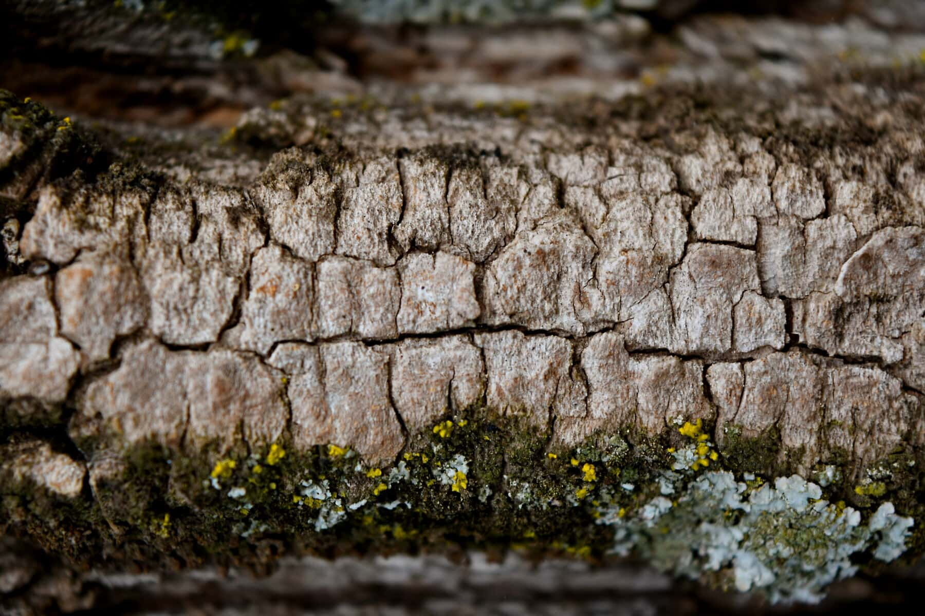 close-up, bark, lichen, moss, focus, fungus, macro, nature, texture, surface