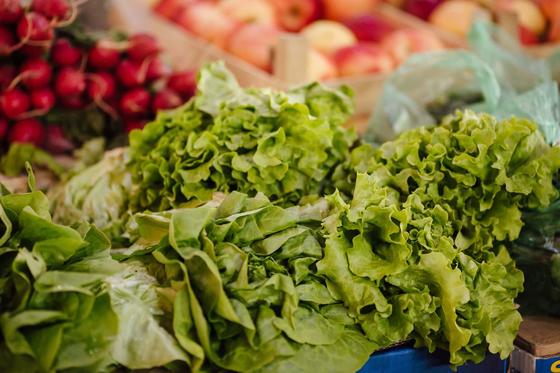 shopping, lettuce, marketplace, green leaves, production, agriculture, farming, food, salad, diet