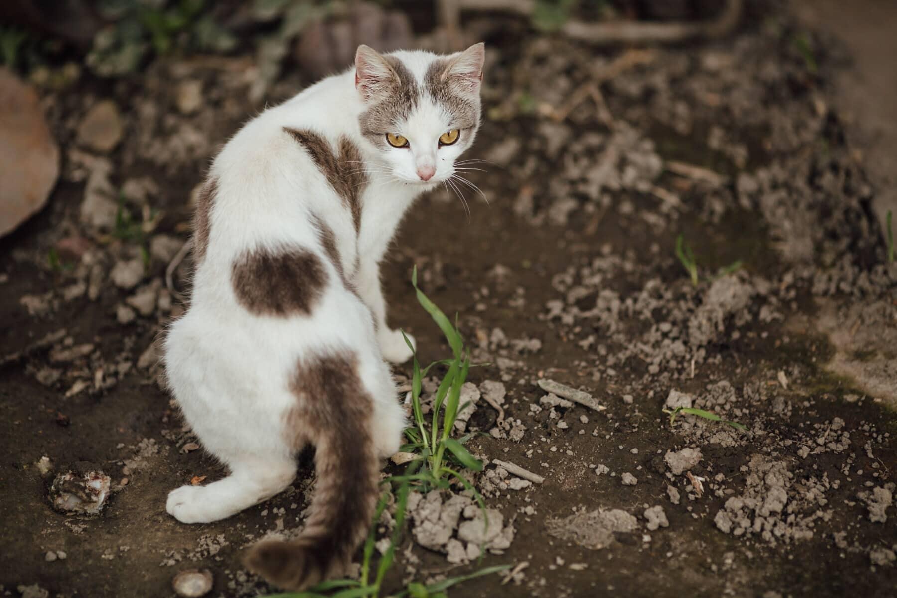 feline, kitten, cat, animal, kitty, young, cute, pet, fur, whiskers